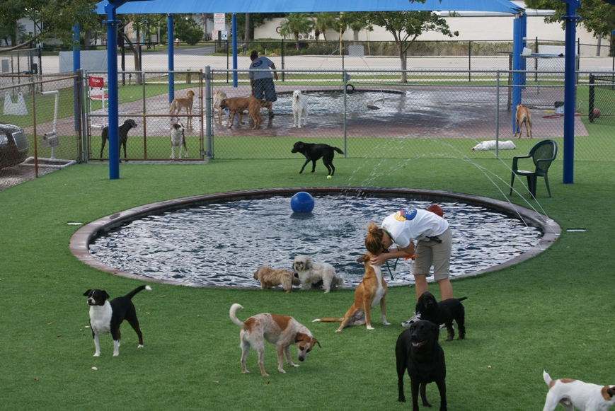 How To Create An Amazing Outdoor Play Area For Your Dog